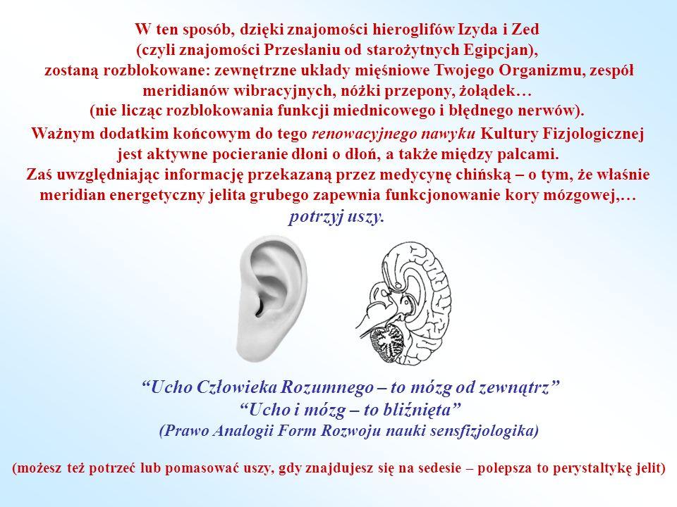 Ucho Człowieka Rozumnego – to mózg od zewnątrz