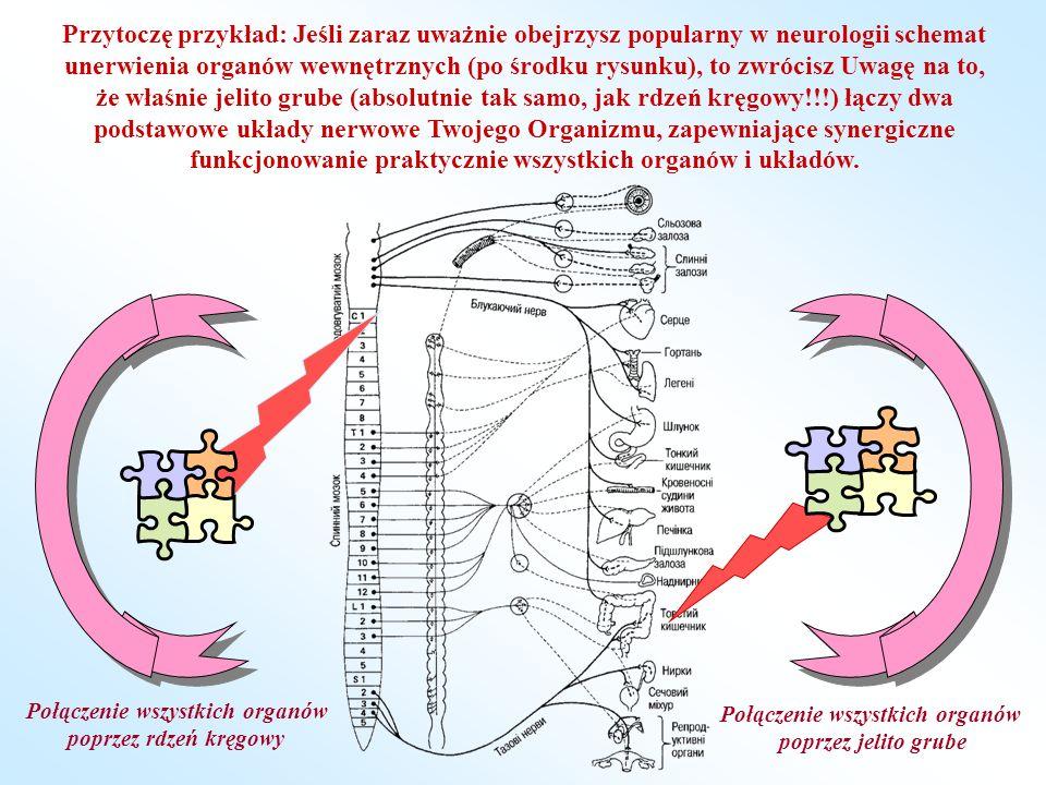 Połączenie wszystkich organów Połączenie wszystkich organów
