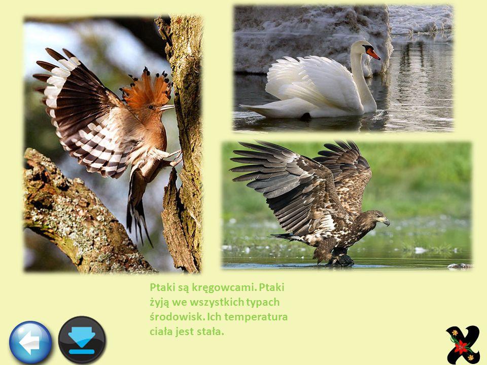 Ptaki są kręgowcami. Ptaki żyją we wszystkich typach środowisk