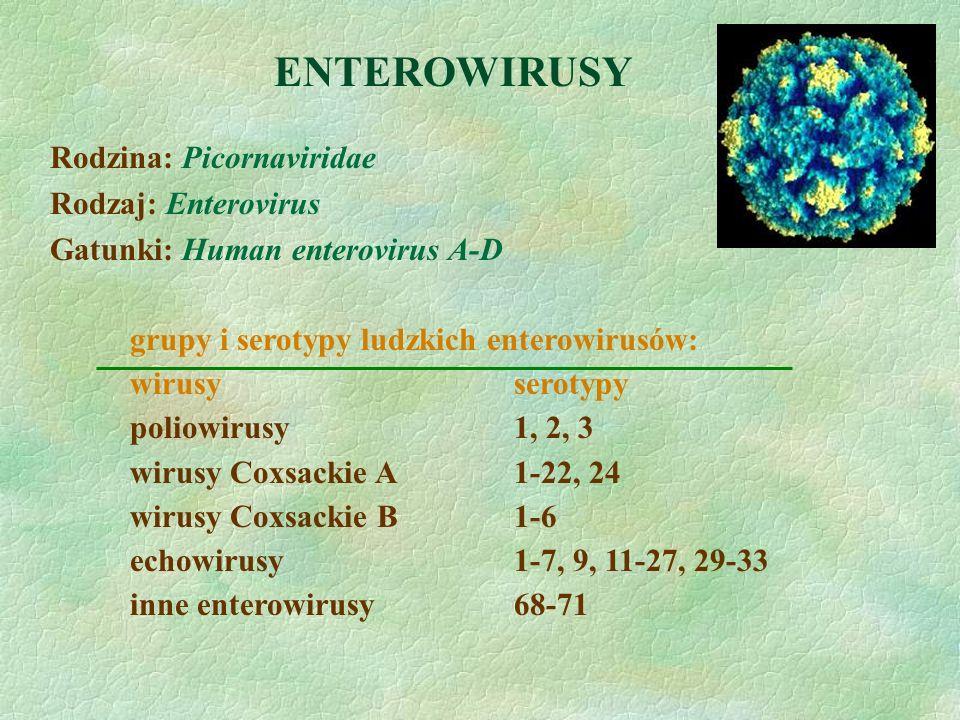 ENTEROWIRUSY Rodzina: Picornaviridae Rodzaj: Enterovirus