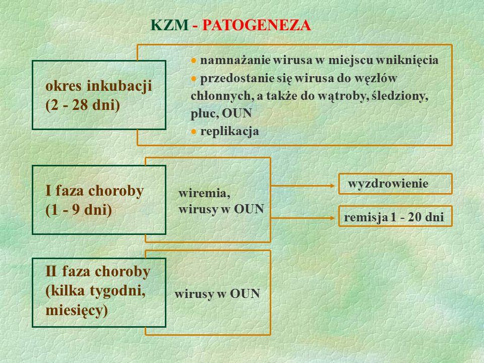 KZM - PATOGENEZA okres inkubacji (2 - 28 dni) I faza choroby