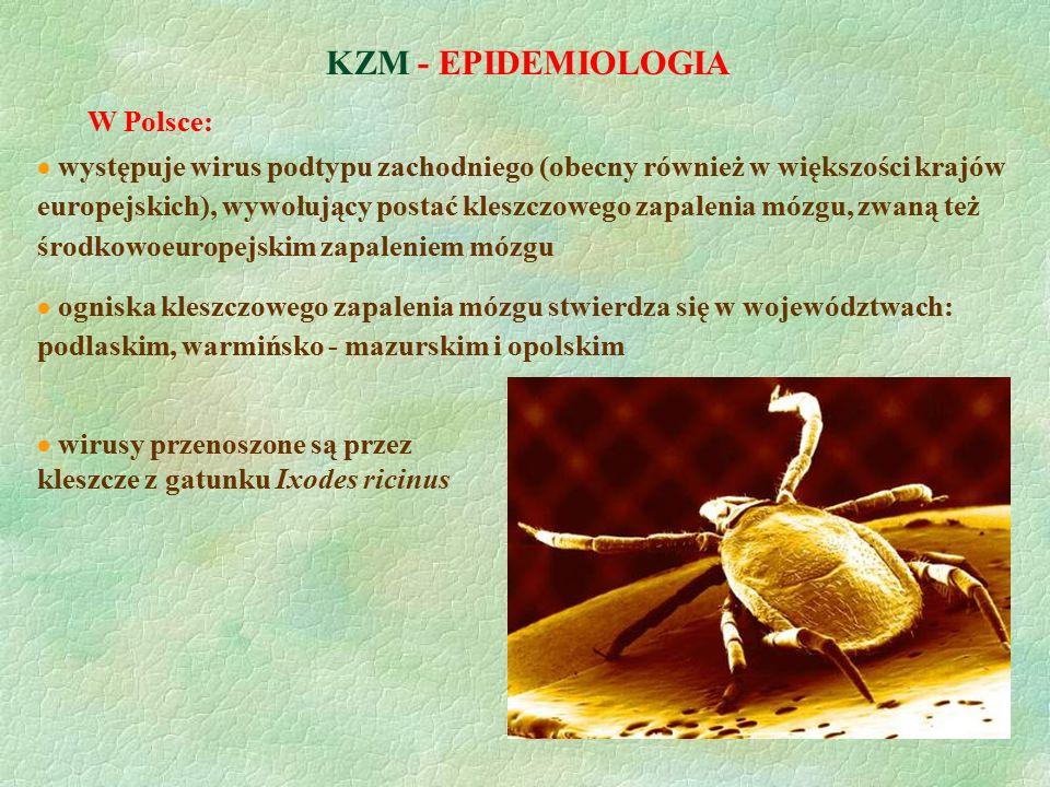 KZM - EPIDEMIOLOGIA W Polsce: