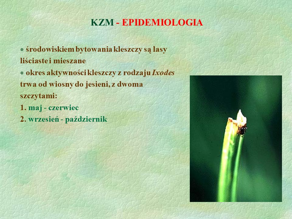 KZM - EPIDEMIOLOGIA środowiskiem bytowania kleszczy są lasy liściaste i mieszane.