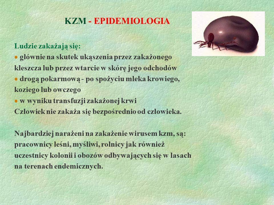 KZM - EPIDEMIOLOGIA Ludzie zakażają się: