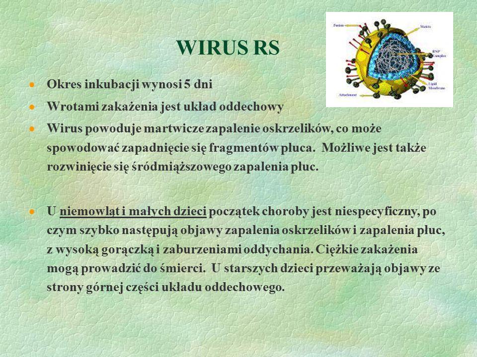 WIRUS RS Okres inkubacji wynosi 5 dni