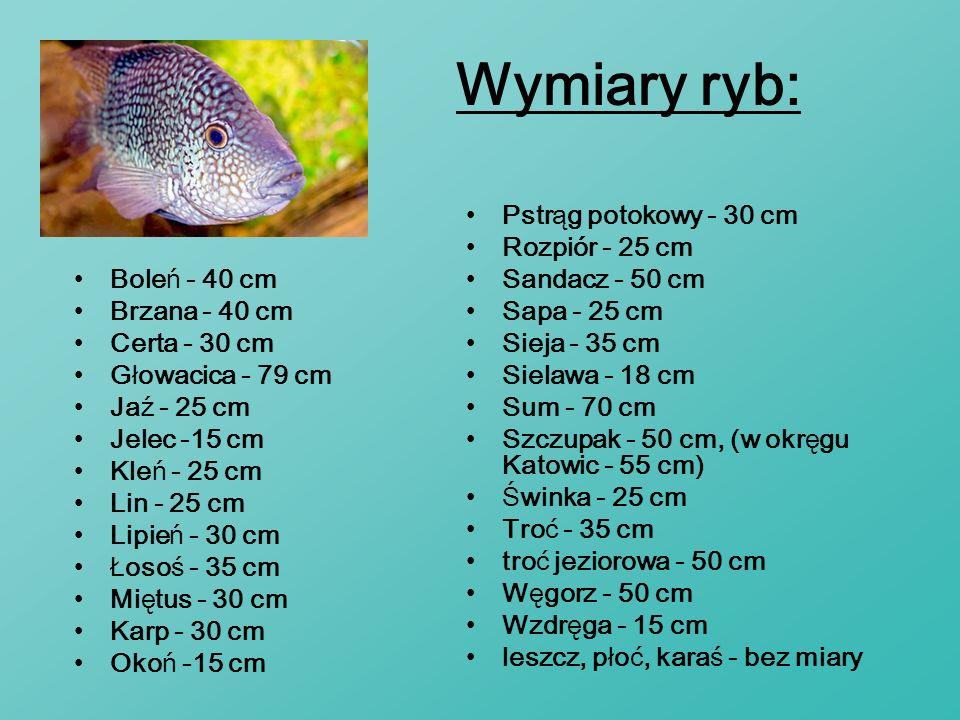 Wymiary ryb: Pstrąg potokowy - 30 cm Rozpiór - 25 cm Sandacz - 50 cm