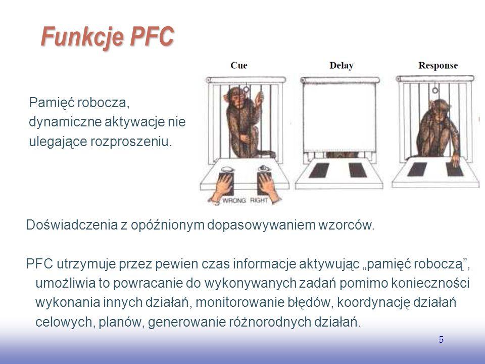 Funkcje PFC Pamięć robocza, dynamiczne aktywacje nie ulegające rozproszeniu. Doświadczenia z opóźnionym dopasowywaniem wzorców.