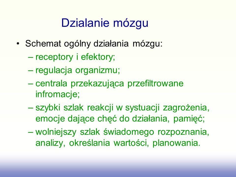Dzialanie mózgu Schemat ogólny działania mózgu: receptory i efektory;