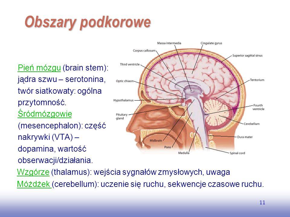 EE141 Obszary podkorowe. Pień mózgu (brain stem): jądra szwu – serotonina, twór siatkowaty: ogólna przytomność.