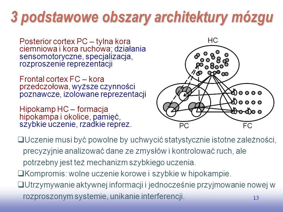 3 podstawowe obszary architektury mózgu