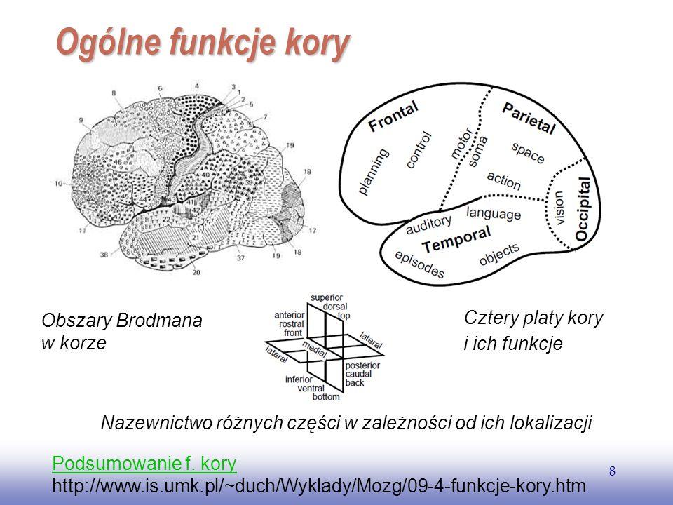 Ogólne funkcje kory Cztery platy kory Obszary Brodmana i ich funkcje