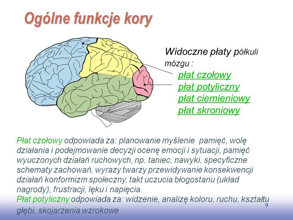 Ogólne funkcje kory Widoczne płaty półkuli mózgu : płat czołowy