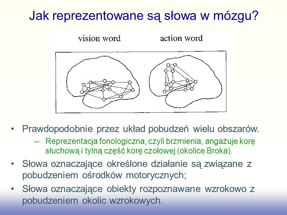 Jak reprezentowane są słowa w mózgu