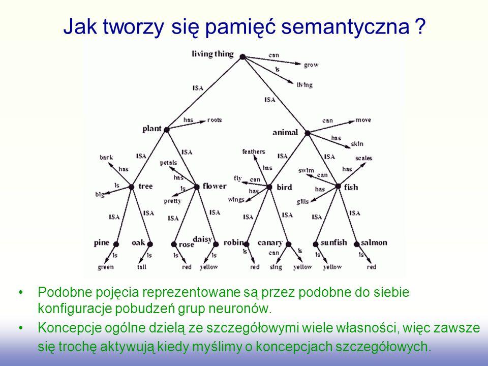 Jak tworzy się pamięć semantyczna