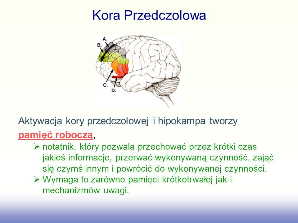 Kora Przedczolowa Aktywacja kory przedczołowej i hipokampa tworzy