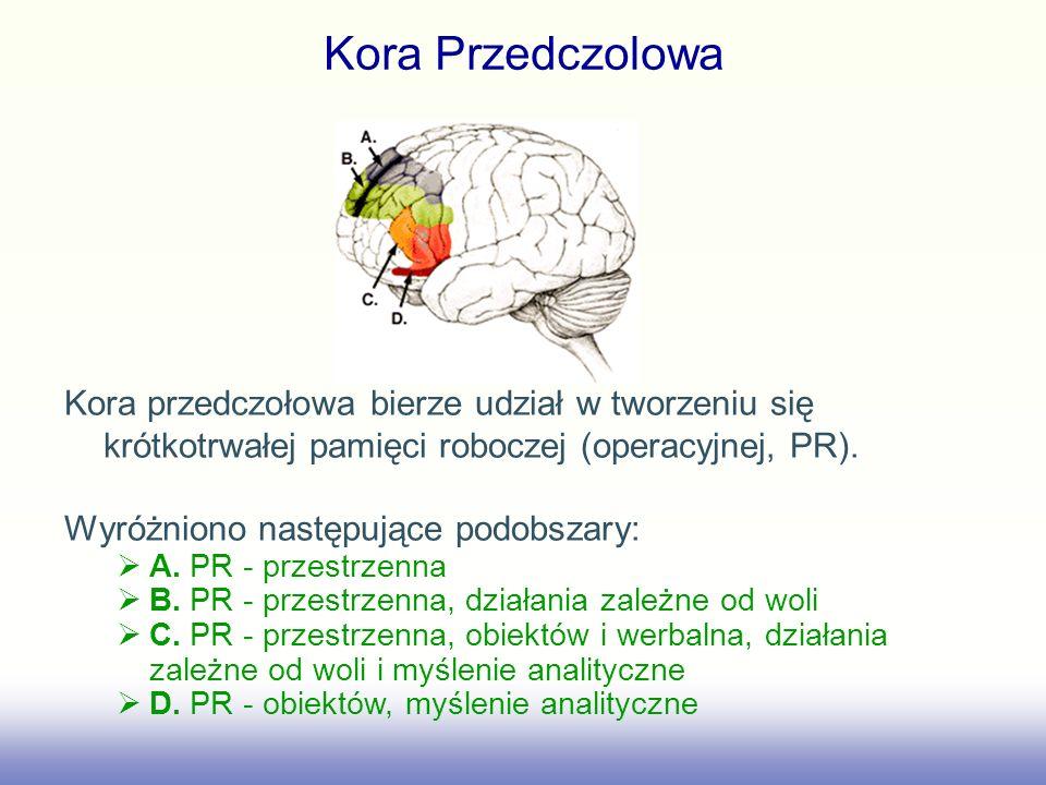 Kora Przedczolowa Kora przedczołowa bierze udział w tworzeniu się krótkotrwałej pamięci roboczej (operacyjnej, PR).