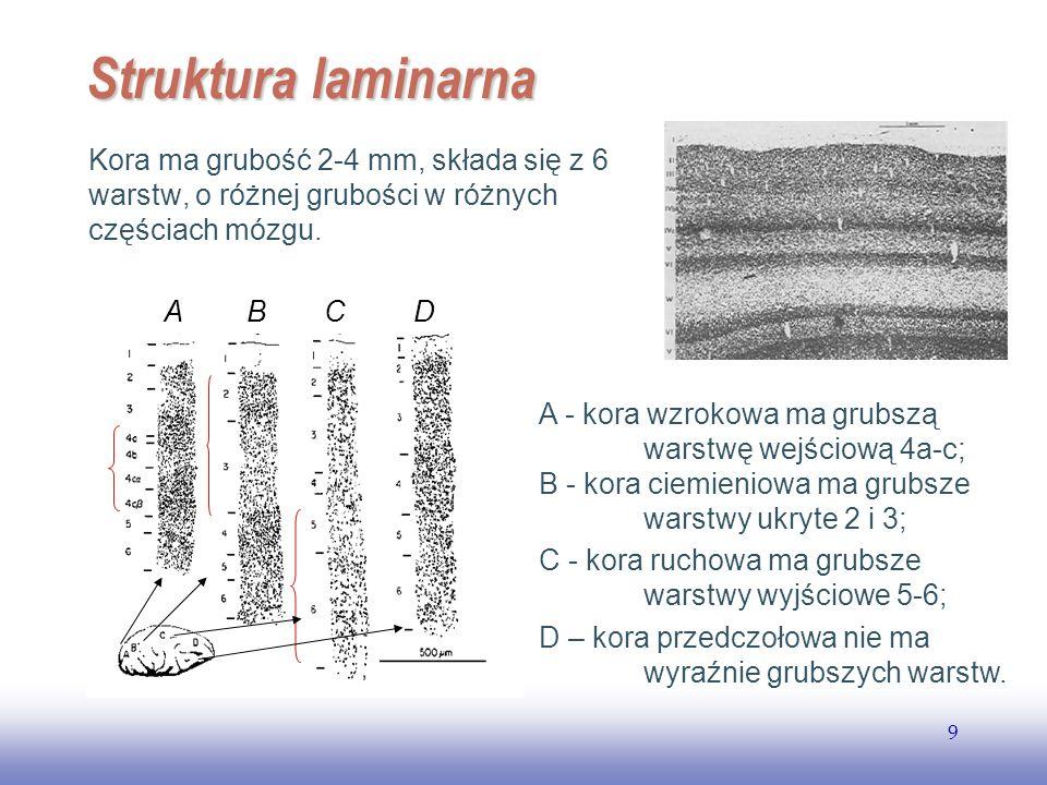 EE141 Struktura laminarna. Kora ma grubość 2-4 mm, składa się z 6 warstw, o różnej grubości w różnych częściach mózgu.
