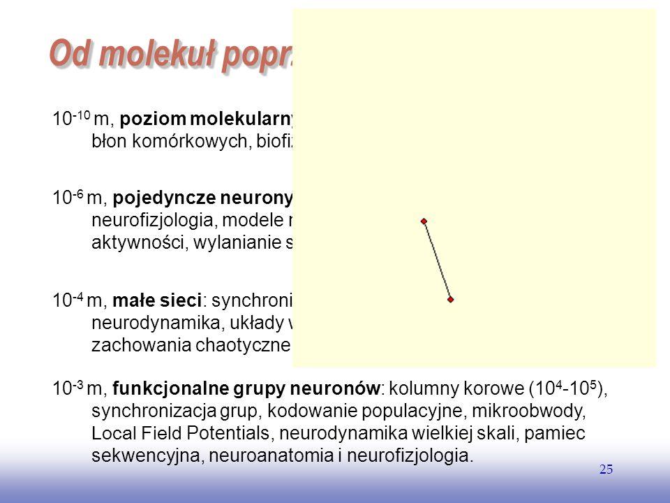 Od molekuł poprzez sieci neuronow...