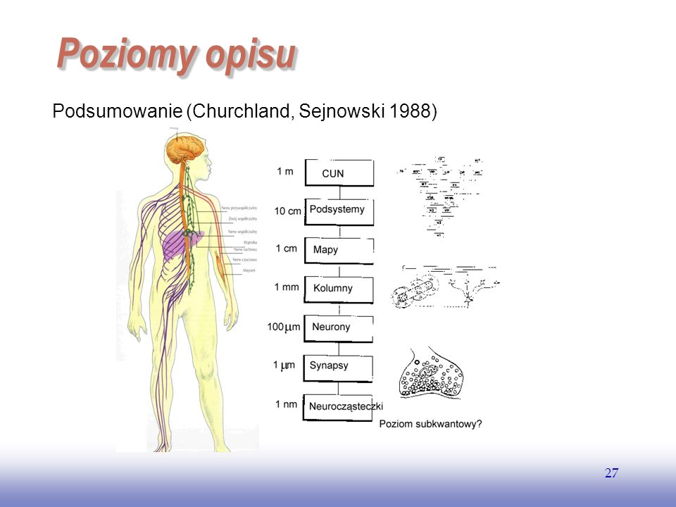 EE141 Poziomy opisu Podsumowanie (Churchland, Sejnowski 1988)