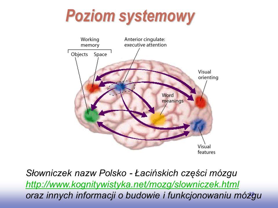 Poziom systemowy Słowniczek nazw Polsko - Łacińskich części mózgu