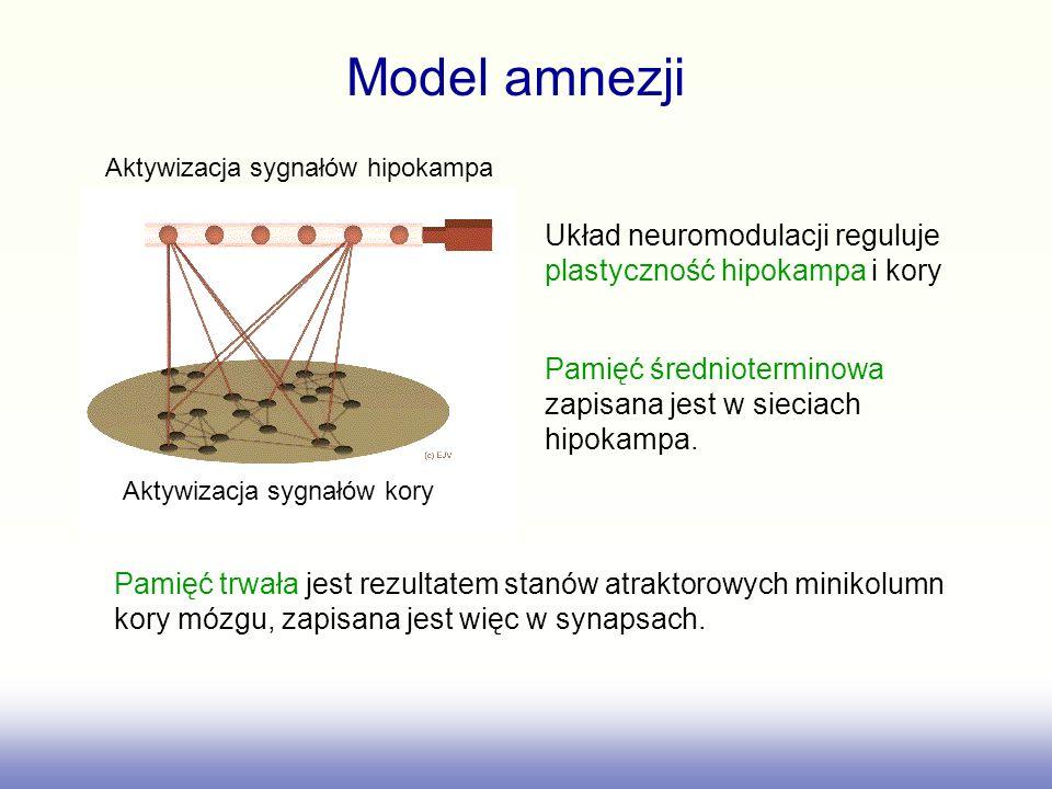 Model amnezji Aktywizacja sygnałów hipokampa. Aktywizacja sygnałów kory. Układ neuromodulacji reguluje plastyczność hipokampa i kory.
