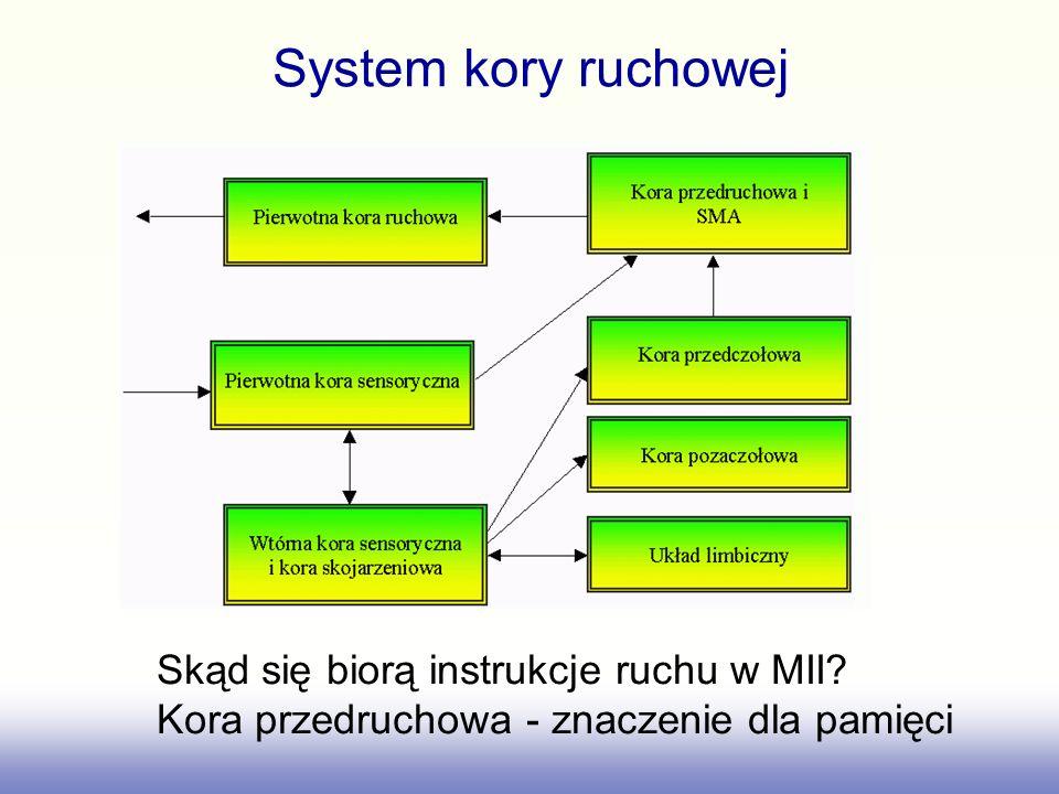 System kory ruchowej Skąd się biorą instrukcje ruchu w MII.