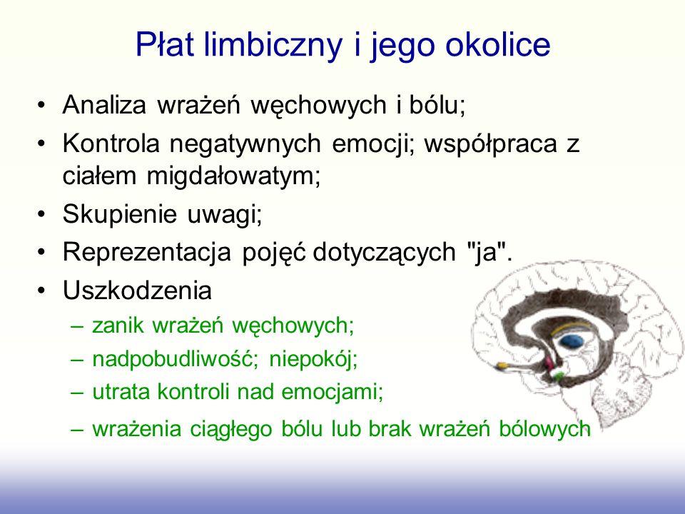 Płat limbiczny i jego okolice