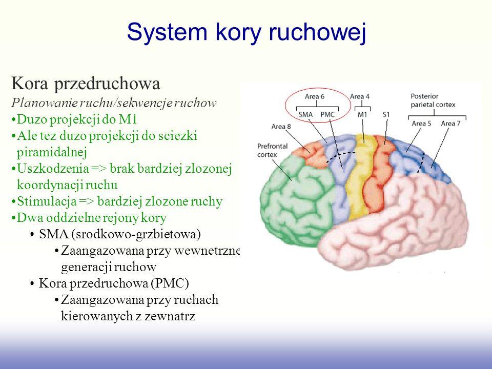 System kory ruchowej Kora przedruchowa
