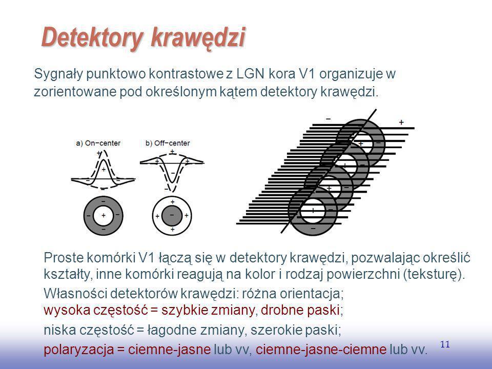 EE141 Detektory krawędzi. Sygnały punktowo kontrastowe z LGN kora V1 organizuje w. zorientowane pod określonym kątem detektory krawędzi.