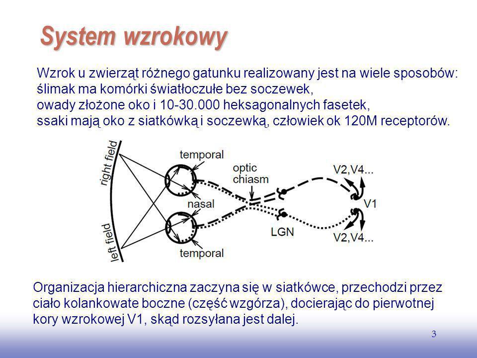 EE141 System wzrokowy.