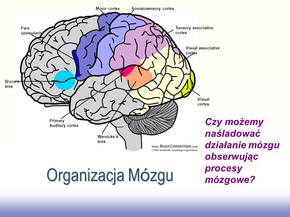 Organizacja Mózgu Czy możemy naśladować działanie mózgu obserwując