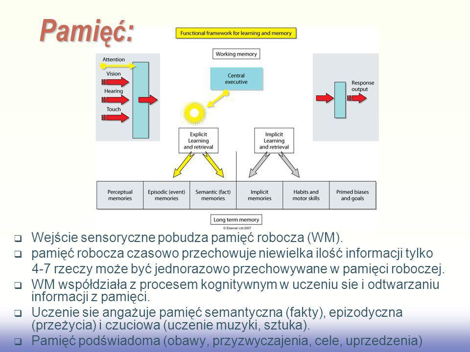Pamięć: Wejście sensoryczne pobudza pamięć robocza (WM).
