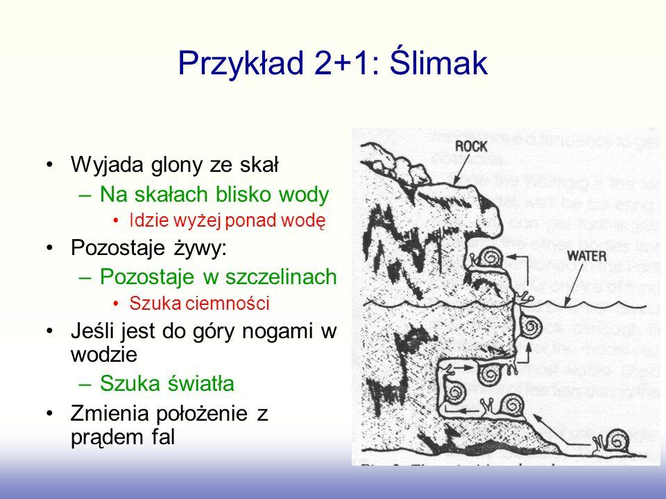 Przykład 2+1: Ślimak Wyjada glony ze skał Na skałach blisko wody