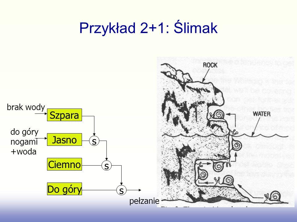 Przykład 2+1: Ślimak Szpara Jasno s Ciemno s Do góry s brak wody