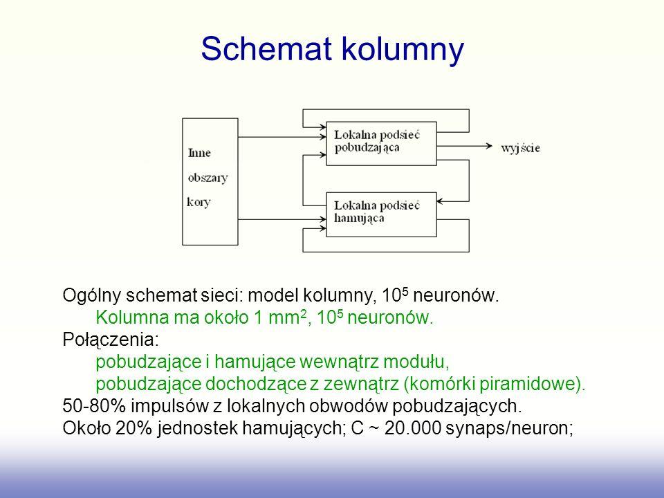 Schemat kolumny Ogólny schemat sieci: model kolumny, 105 neuronów.