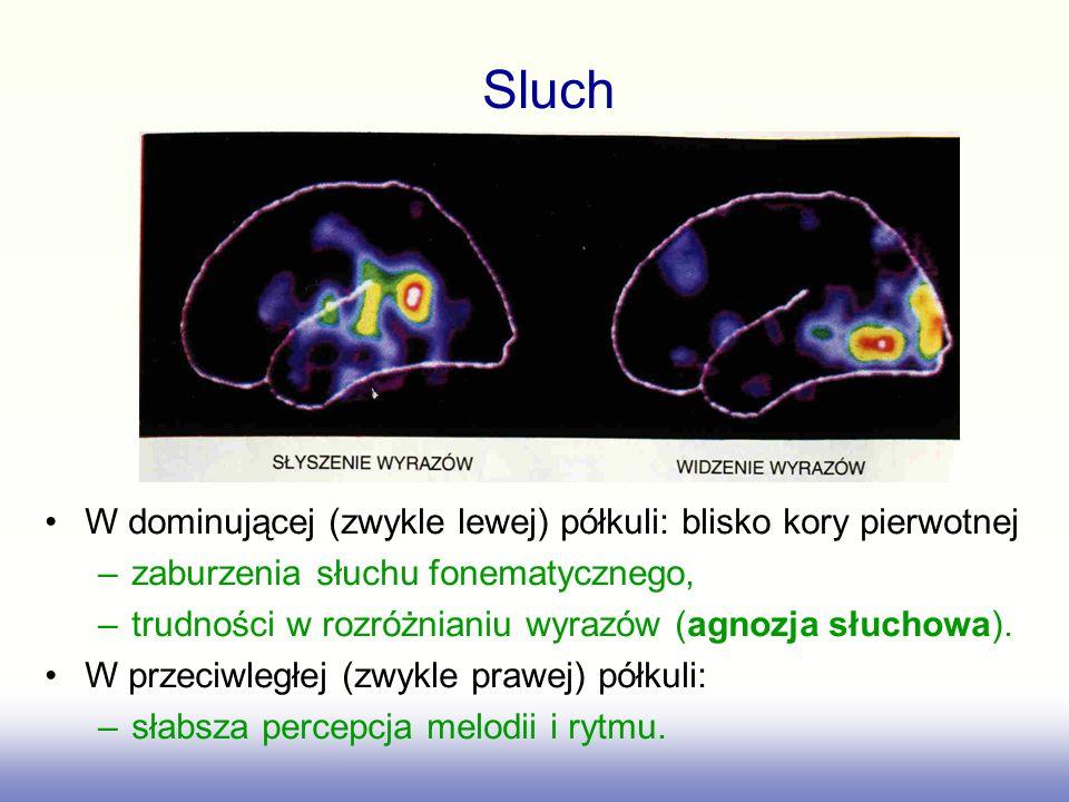 Sluch W dominującej (zwykle lewej) półkuli: blisko kory pierwotnej