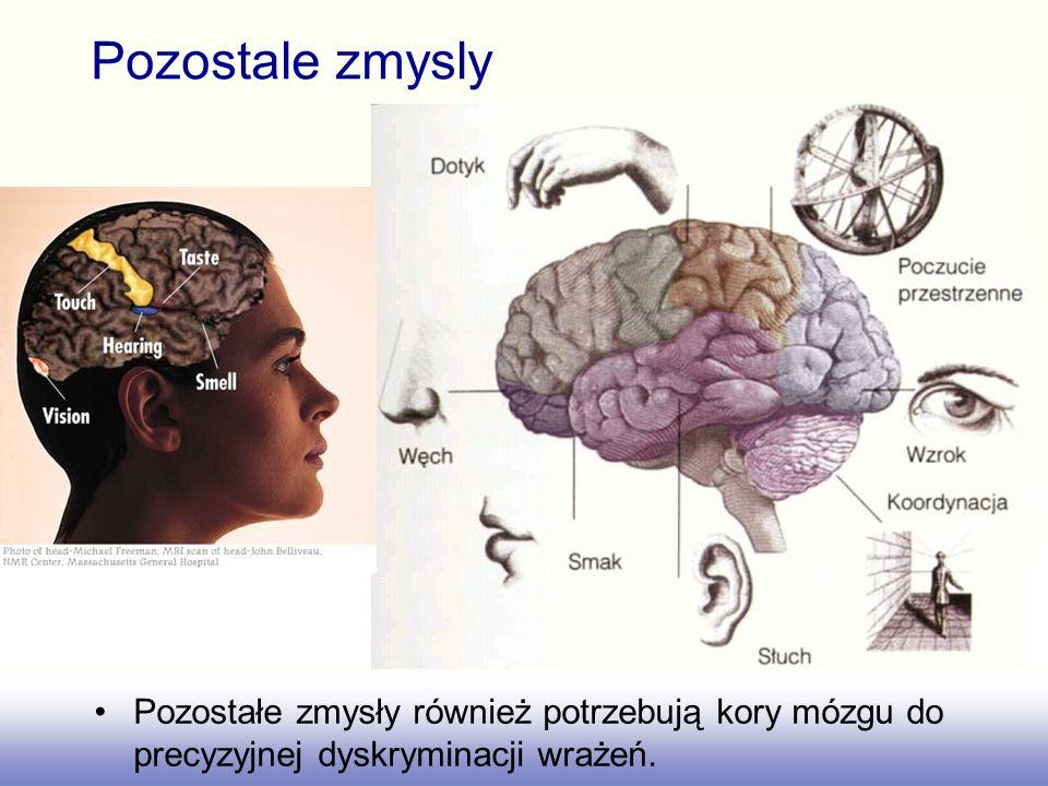 Pozostale zmysly Pozostałe zmysły również potrzebują kory mózgu do precyzyjnej dyskryminacji wrażeń.