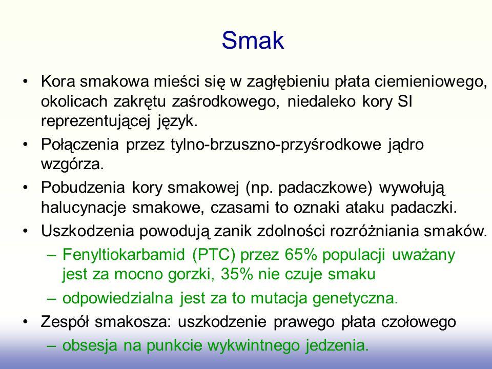 Smak Kora smakowa mieści się w zagłębieniu płata ciemieniowego, okolicach zakrętu zaśrodkowego, niedaleko kory SI reprezentującej język.