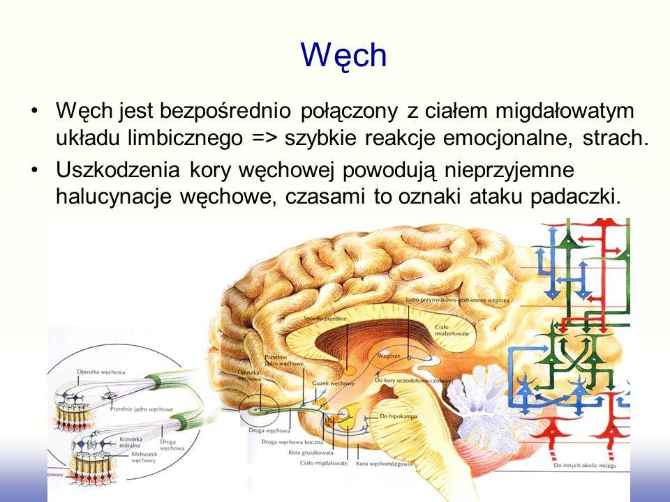 Węch Węch jest bezpośrednio połączony z ciałem migdałowatym układu limbicznego => szybkie reakcje emocjonalne, strach.