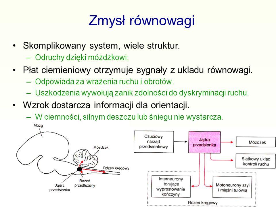Zmysł równowagi Skomplikowany system, wiele struktur.