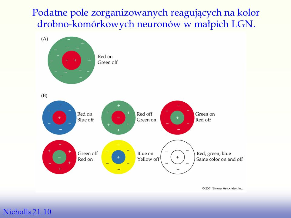 Podatne pole zorganizowanych reagujących na kolor