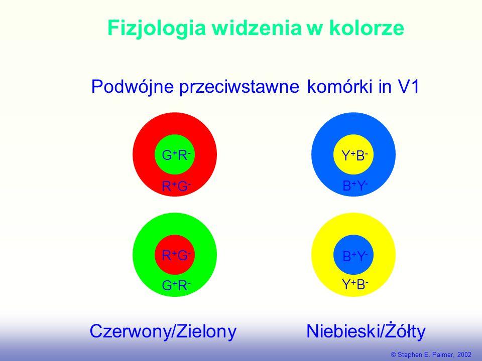 Fizjologia widzenia w kolorze