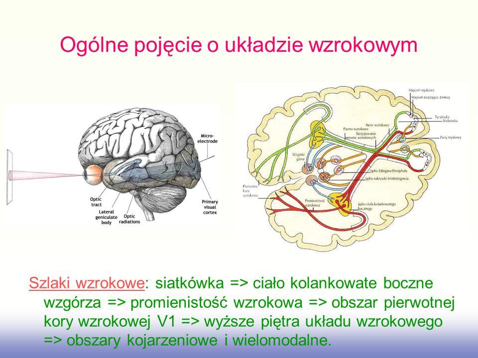 Ogólne pojęcie o układzie wzrokowym