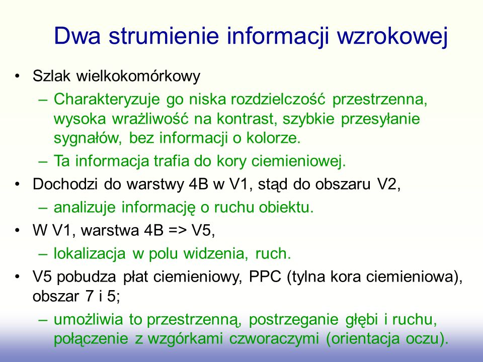Dwa strumienie informacji wzrokowej