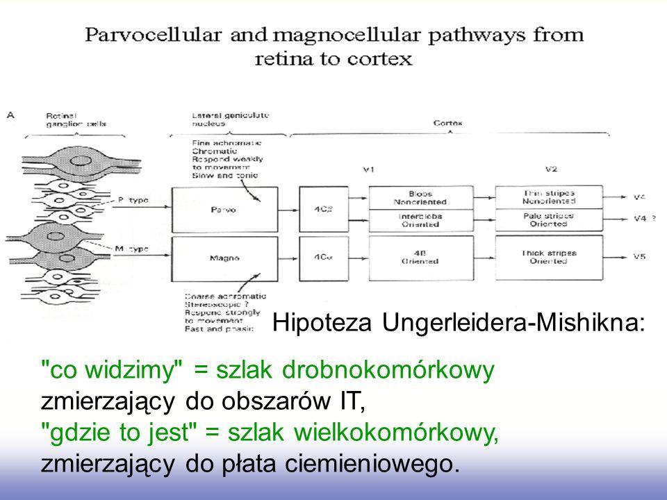 Hipoteza Ungerleidera-Mishikna: