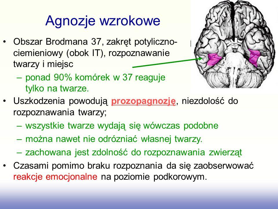 Agnozje wzrokowe Obszar Brodmana 37, zakręt potyliczno-ciemieniowy (obok IT), rozpoznawanie twarzy i miejsc.