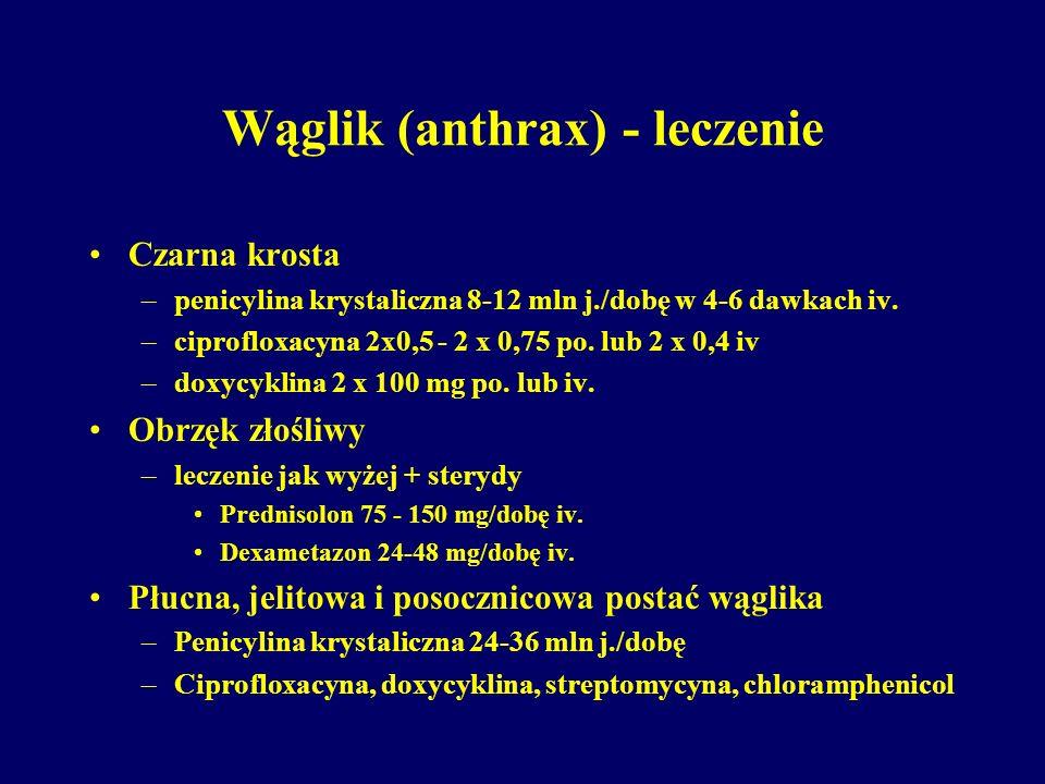 Wąglik (anthrax) - leczenie