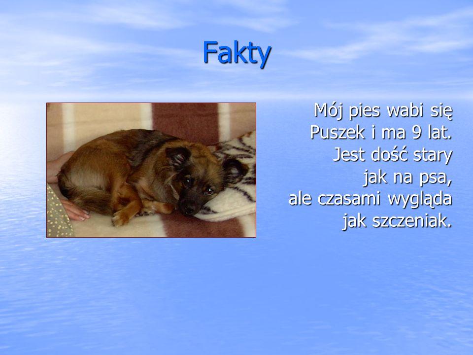 Fakty Mój pies wabi się Puszek i ma 9 lat.