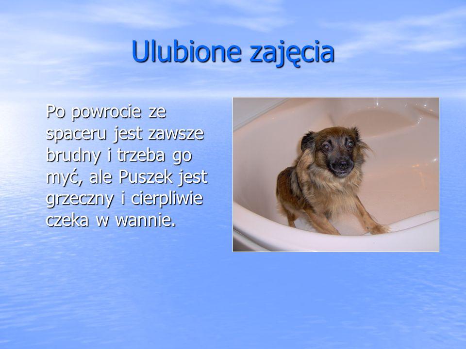 Ulubione zajęcia Po powrocie ze spaceru jest zawsze brudny i trzeba go myć, ale Puszek jest grzeczny i cierpliwie czeka w wannie.