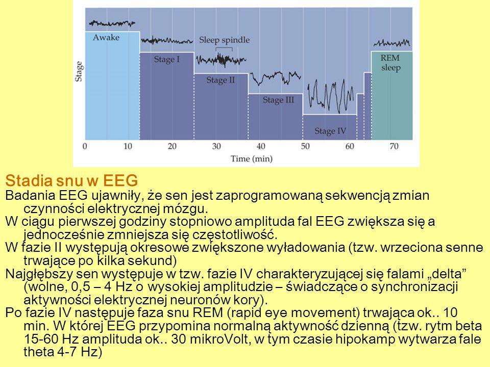 Stadia snu w EEG Badania EEG ujawniły, że sen jest zaprogramowaną sekwencją zmian czynności elektrycznej mózgu.